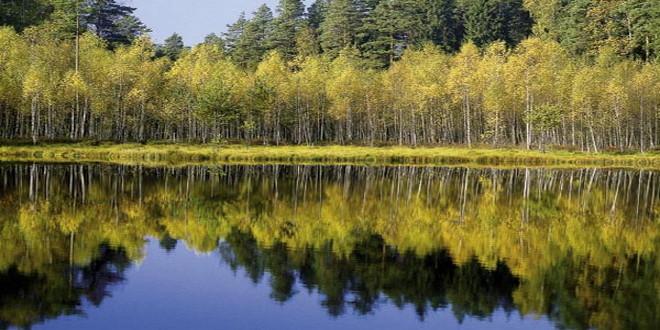 El Bosque de Białowieża en Polonia, el último bosque virgen de Europa Img332
