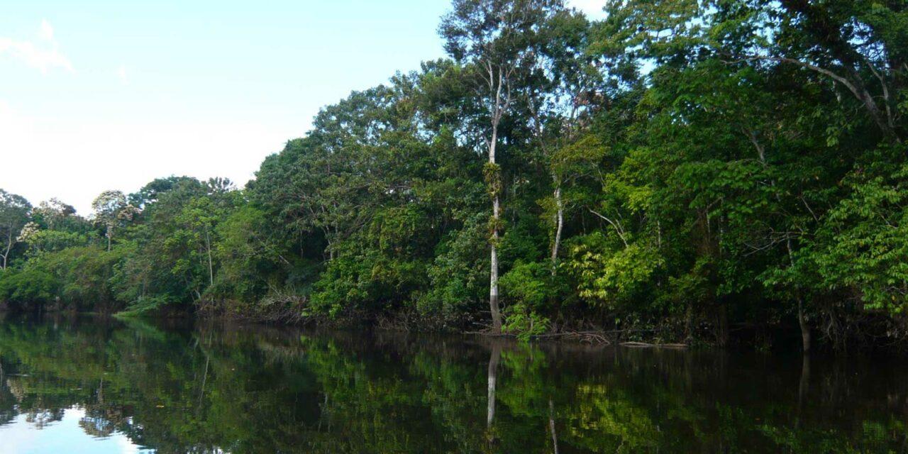 Viaja a la emocionante selva amazónica