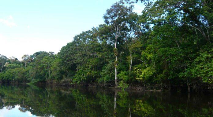 Visitar el Amazonas