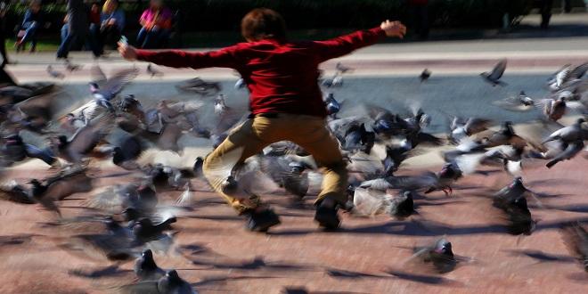 dar de comer a las palomas