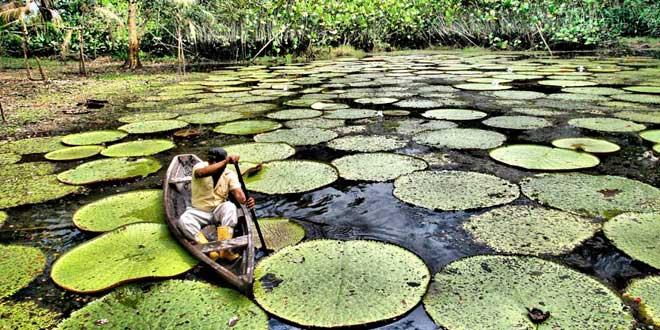 visitar-la-selva-amazonica