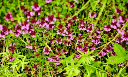 El Valle de las Flores: un colorido paraíso