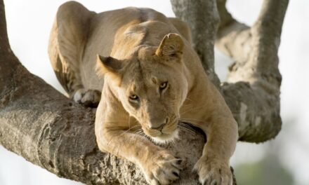 Kenia: El safari perfecto