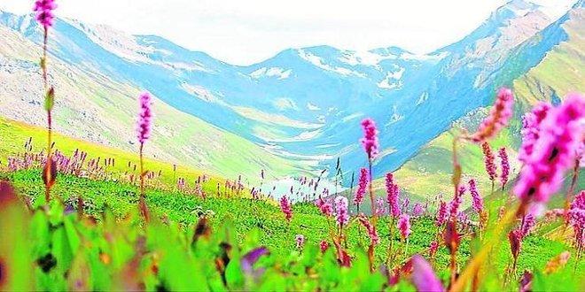 conoce el valle de las flores en india