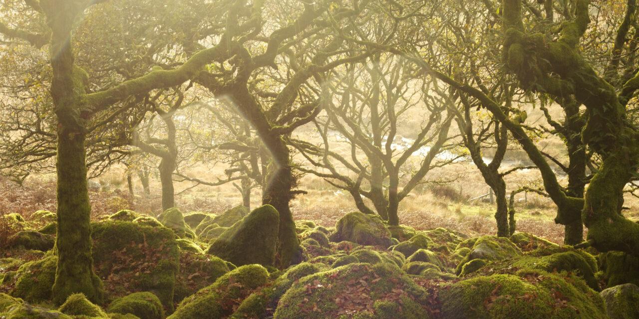 7 bosques de ensueño. ¡Conócelos!
