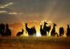 Animales que solo encontrarás en Australia