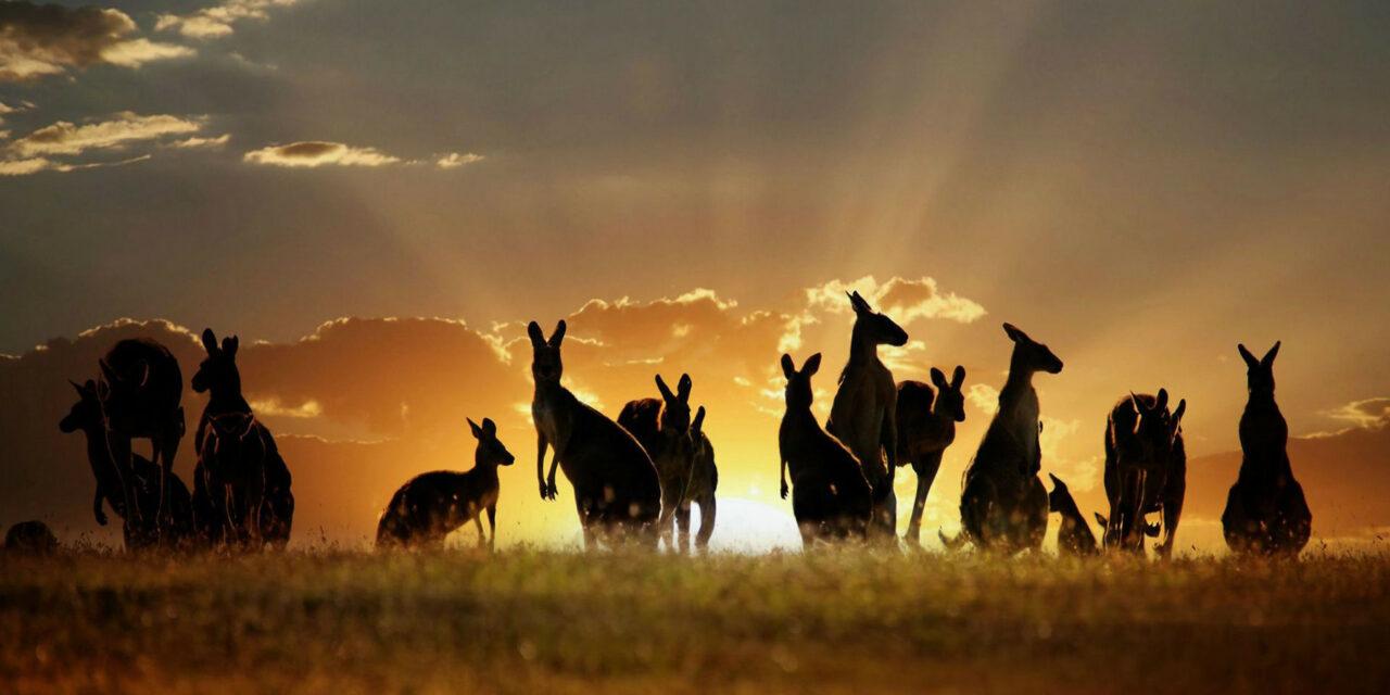 Animales que sólo encontrarás en Australia