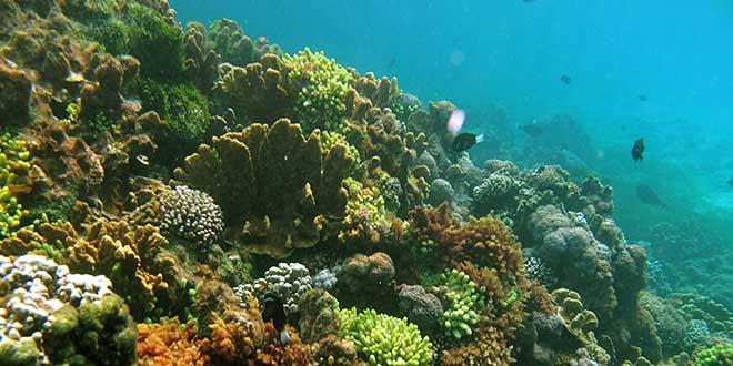 Isla-Howe-fondos-marinos