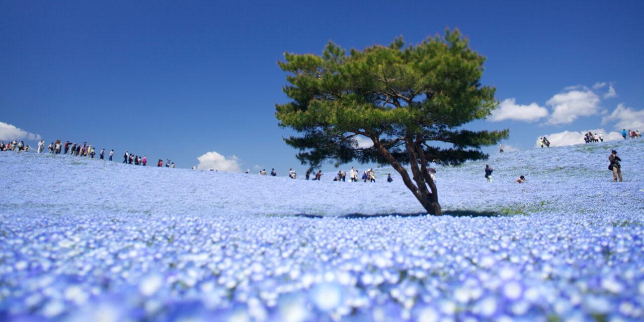 El mágico Parque Hitachi, en Japón