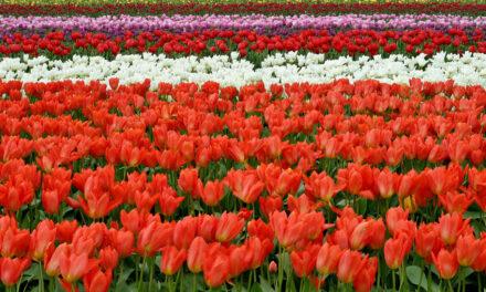 3 lugares preciosos para disfrutar de las flores