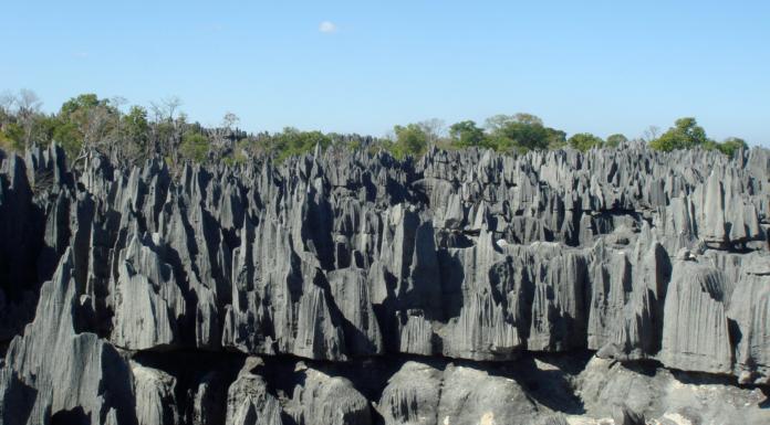"""El impresionante """"bosque de piedra"""" en Madagascar"""