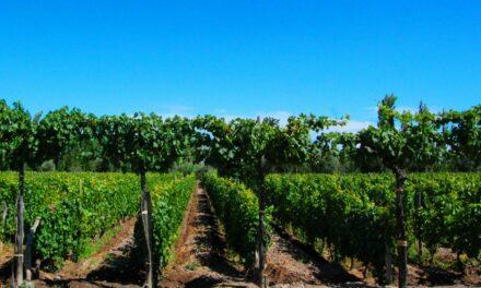 Mendoza, tierra del sol y  del buen vino