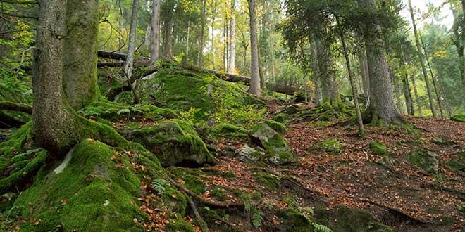 Bosque-de-Triberg