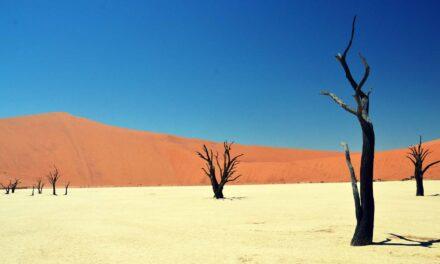 Dead Vlei, el turbador cementerio de árboles