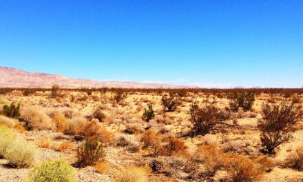 Mojave, el desierto que rodea Las Vegas
