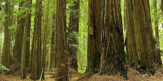 Parque Nacional Redwood, California.