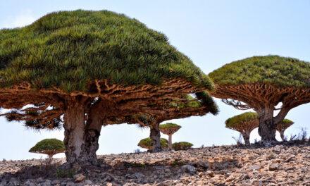 Socotra, Yemen: un viaje en el tiempo