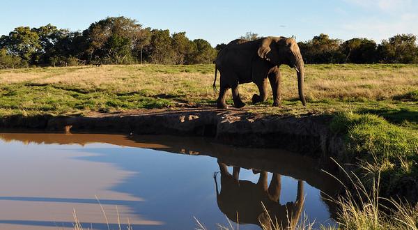 Surafrica-1