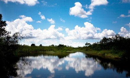 Everglades, donde viven los monstruos