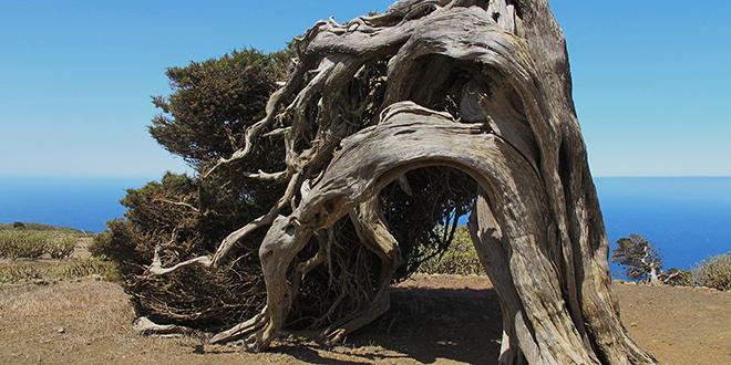 La sabina, isla de El Hierro