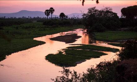 Reserva Selous, el corazón de Tanzania