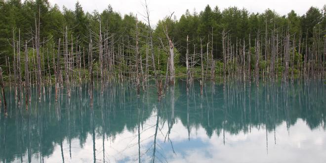 3Blue pond japón