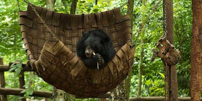 Kuang-Si-centro-recuperación-osos