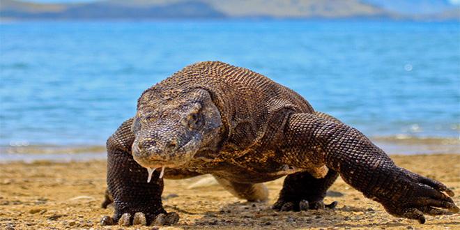 Parque Komodo