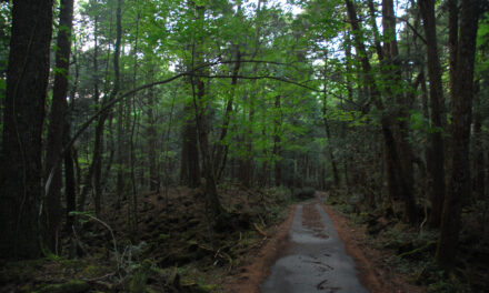 El terrorífico bosque del Suicidio