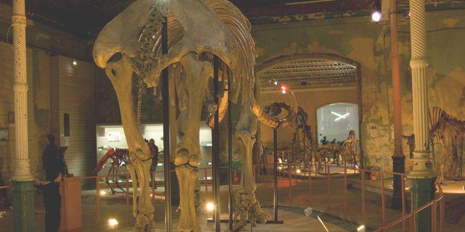Museo Paleontológico de Perm