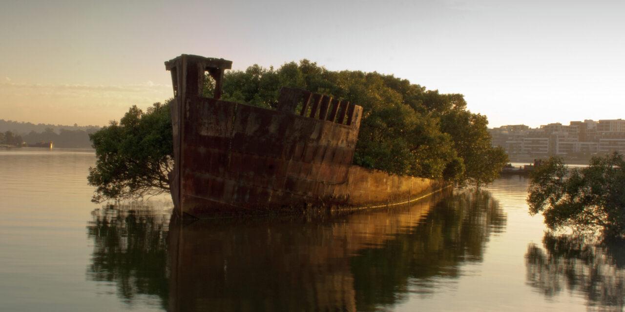SS Ayrfield, el bosque flotante