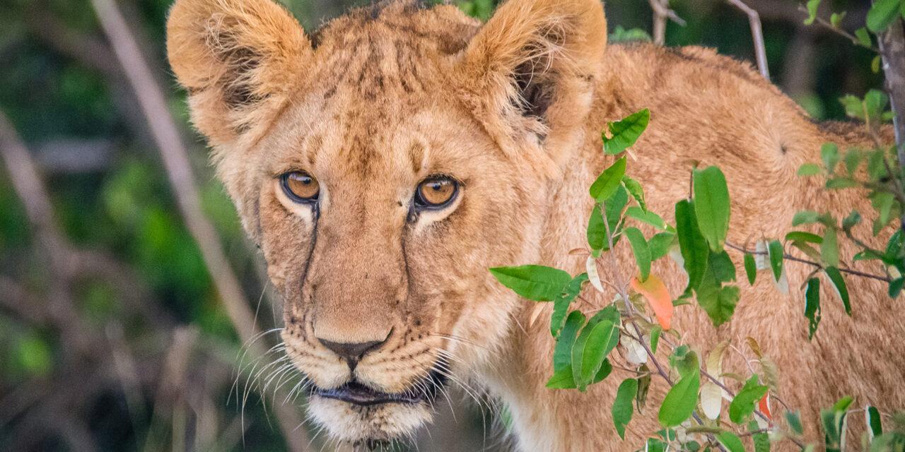 Safari «low cost», ¡es posible!