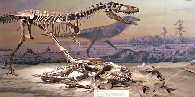 Cementerio de los dinosaurios