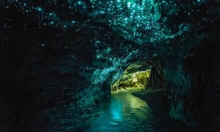 Las cuevas luminosas de Waitomo