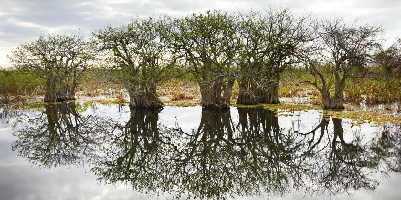 Aventura en Florida: pantanos y bosques