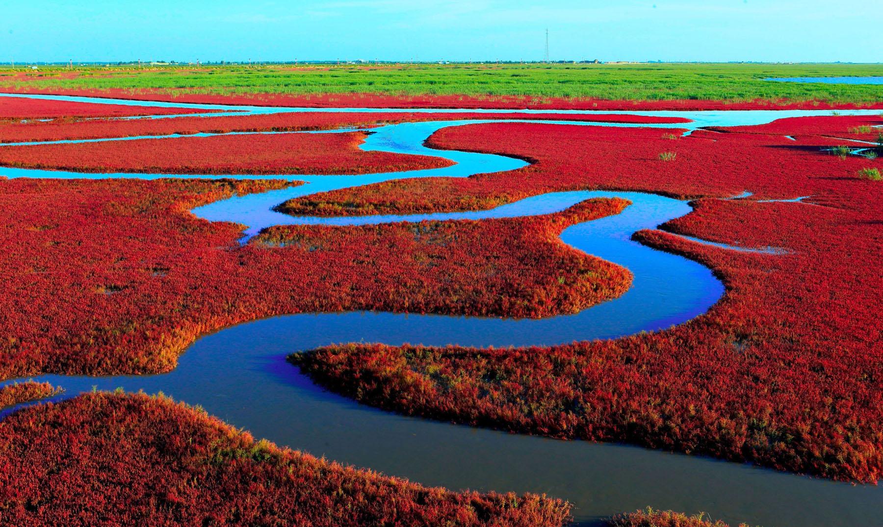 Panjin La Playa Del Mar Rojo El Viajero Feliz