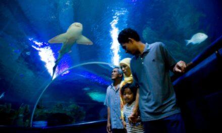 Aquaria KLCC: ¿Quieres conocer el mar en pocas horas?