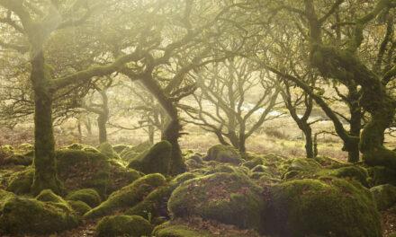 El bosque hechizado: Wistman's Wood