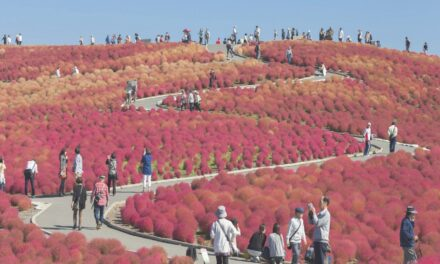 Parque Costero Hitachi: siéntete en el Mago de Oz