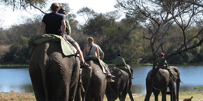 Safari sobre elefante