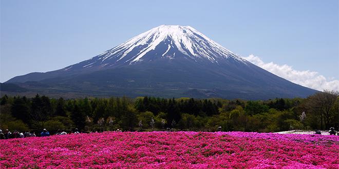 Shibazakuza y monte fuji