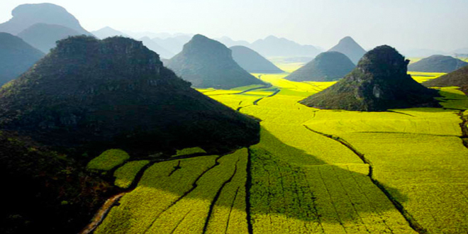 Los campos de colza en China