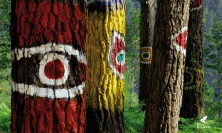 El bosque de Oma, el país de las maravillas