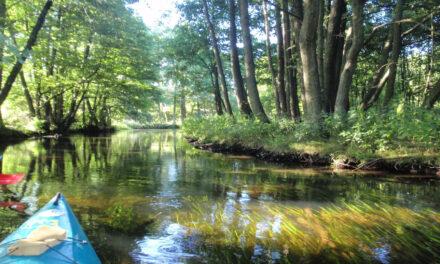 El misterioso y antiguo Bosque Bialowieza en Polonia