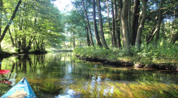 Bosque Bialowieza en Polonia