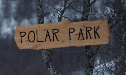Baila con lobos en Polar Park