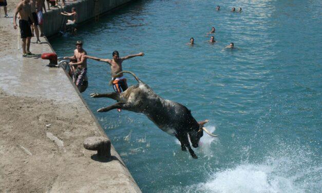 Bous a la Mar, otro festejo con toros