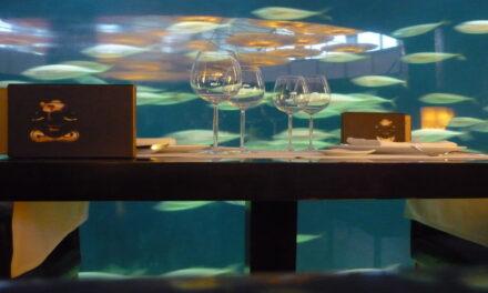 Come bajo el agua en Kihabah, en Maldivas