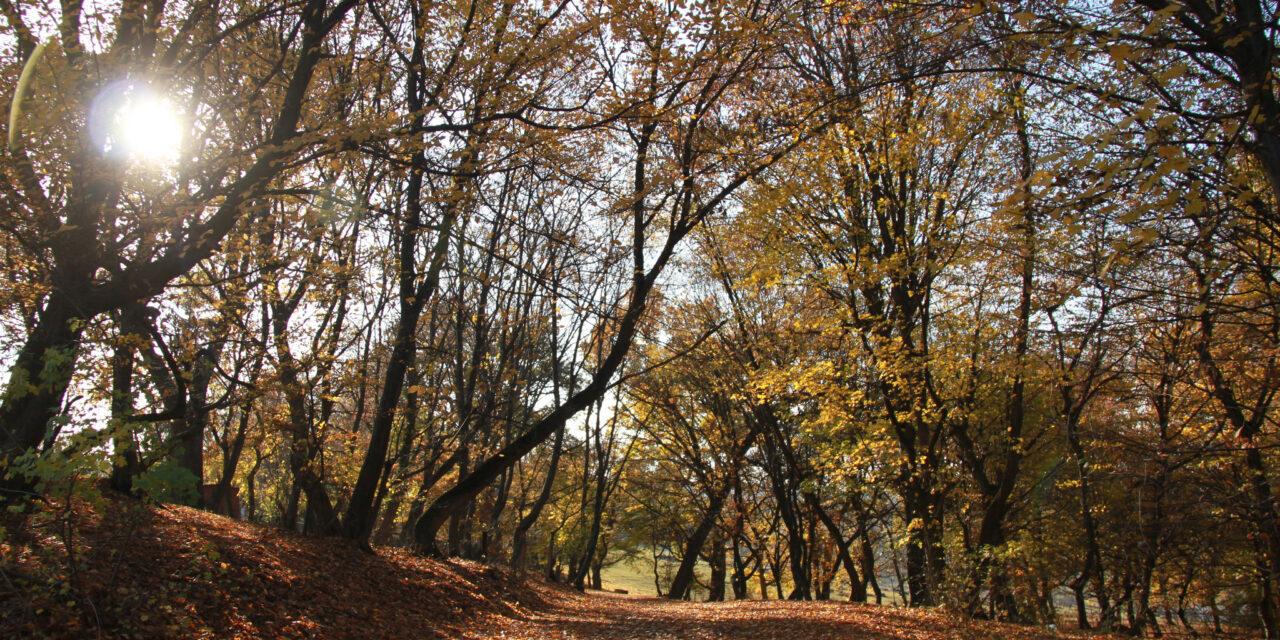 Hoia-Baciu, el bosque maldito de Rumanía