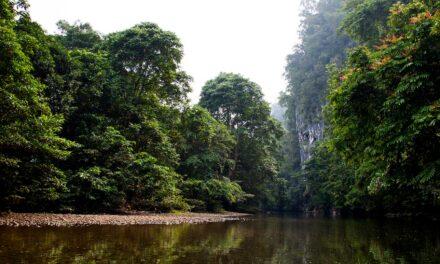 Gunung Mulu, naturaleza sobrecogedora